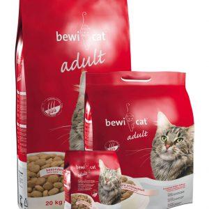 bewi-cat-adult